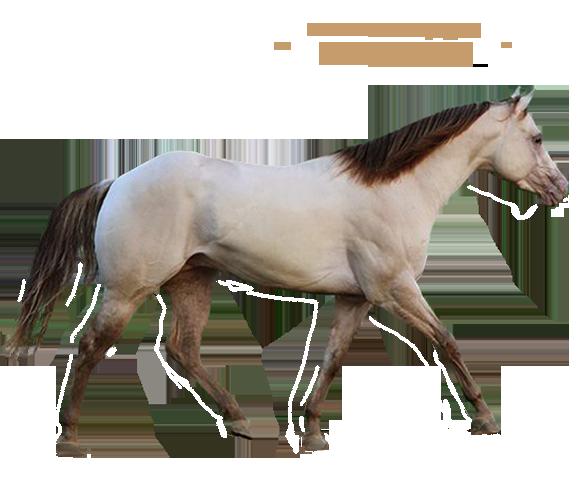 Karen's Quarter Horse & Buckskin Ranch